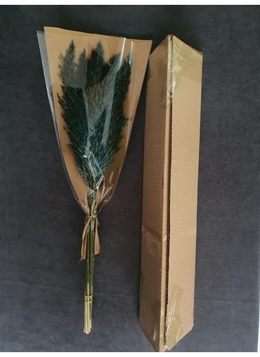 Kuru Çiçek Deposu Kuru Çiçek Şoklanmış 10'Lu Pampas Otu Karışık 60 Cm Yeşil